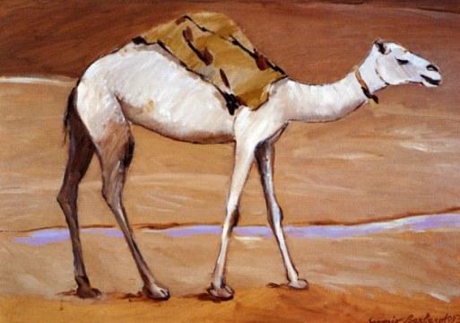 Oued in dromedar, 1993