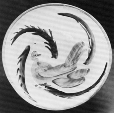 colomba verde, 1985