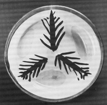 Sole e palme, 1985